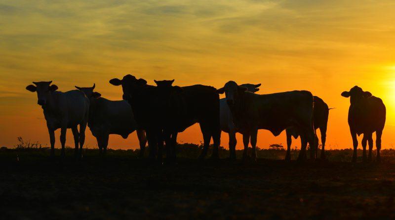 Paraguai quer rastrear carne via Blockchain